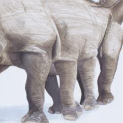 Rhino Scorpion